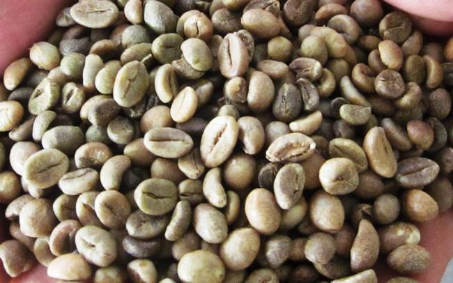 Giá cà phê thế giới giảm phiên cuối tuần kéo theo cà phê trong nước suy yếu trở lại
