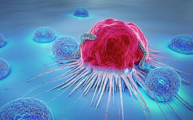 """Liệu chúng ta có thể giết chết tế bào ung thư khi chúng đang """"ngủ""""?"""