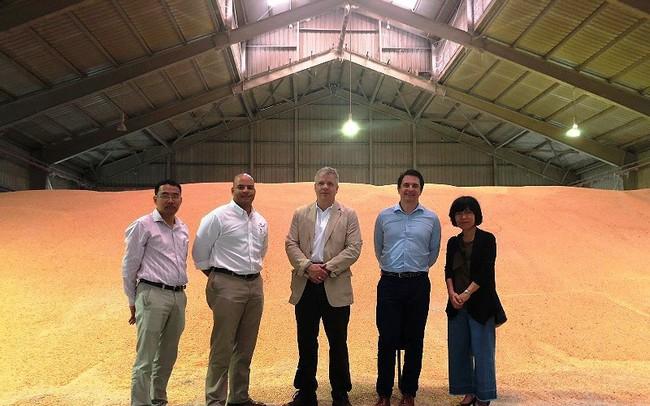 Lô hàng bắp 'lịch sử' 67.000 tấn của Mỹ tới Việt Nam