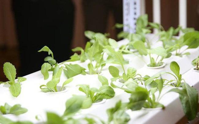 [Case study] Trồng rau sạch trong nhà, không cần đất, nước, ánh sáng, không cần chăm bón: Làm sao để biến ý tưởng thành hóa đơn?