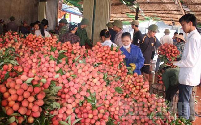 Hàng nghìn thương nhân đổ về Bắc Giang thu mua vải thiều
