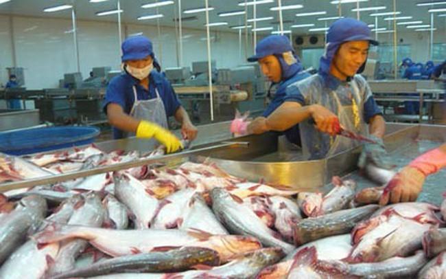 Cá tra phải cạnh tranh với cá rô phi trên thị trường xuất khẩu