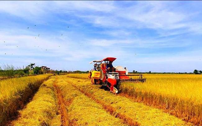 Tổ chức nhỏ lẻ, thiếu liên kết cản trở nông sản Việt