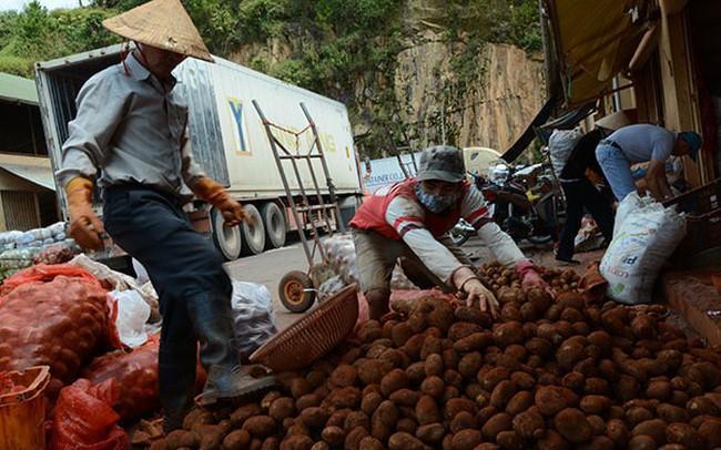 """Nông dân trước nỗi lo nông sản Trung Quốc """"đội lốt"""" Đà Lạt"""