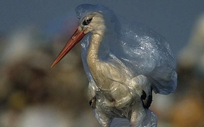 Cả Châu Á đang chung tay chống lại túi nylon, rác thải nhựa như thế nào?