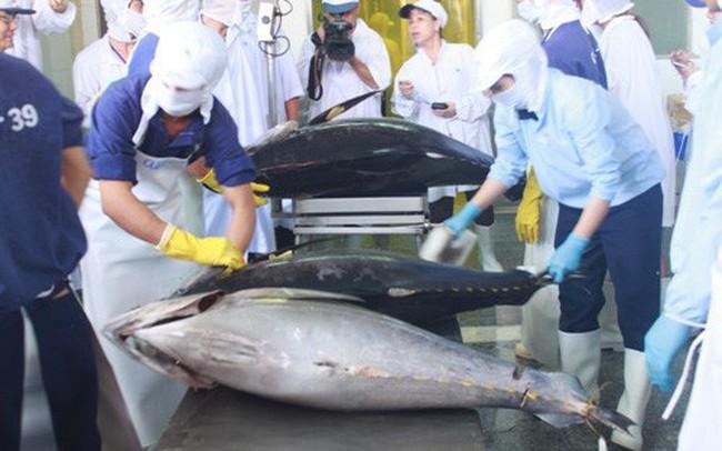Kết quả hình ảnh cho cá ngừ xuất khẩu