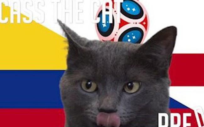 """Dự đoán kết quả tỉ số trận Colombia vs Anh hôm nay của """"nhà tiên tri"""" mèo Cass"""