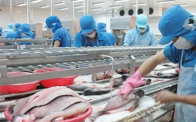 Vượt mặt Trung Quốc, Mỹ trở thành thị trường tiêu thụ cá tra hàng đầu của Việt Nam - ảnh 1