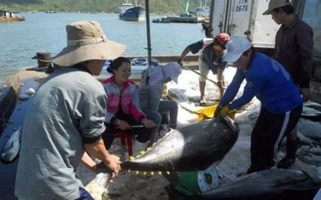 Chiến tranh thương mại Mỹ - Trung: Cơ hội cho doanh nghiệp xuất khẩu cá ngừ sang thị trường Mỹ
