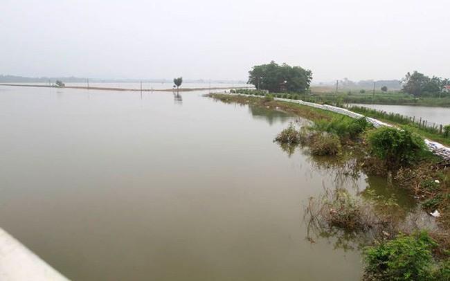 Hà Nội: Nước sông Bùi rút sâu, người dân ra đê câu cá