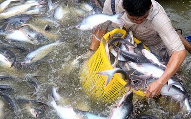Xuất khẩu Việt Nam: Ðã yếu lại hay 'đánh' lẫn nhau