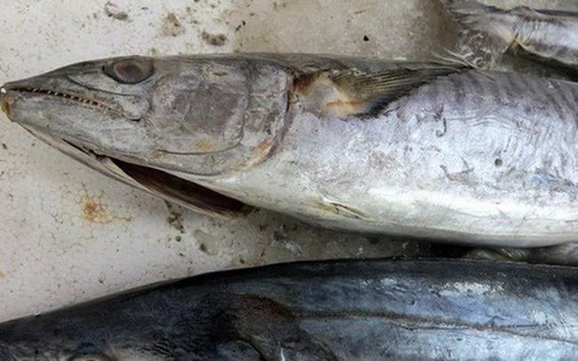 Khuyến cáo của bác sĩ: Ăn cá biển kiểu này dễ ngộ độc nặng!