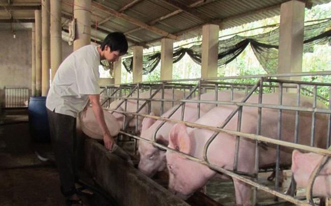 Lợn nội dư thừa, vẫn nhập trên 3.263 tấn thịt lợn ngoại mỗi tháng - ảnh 1