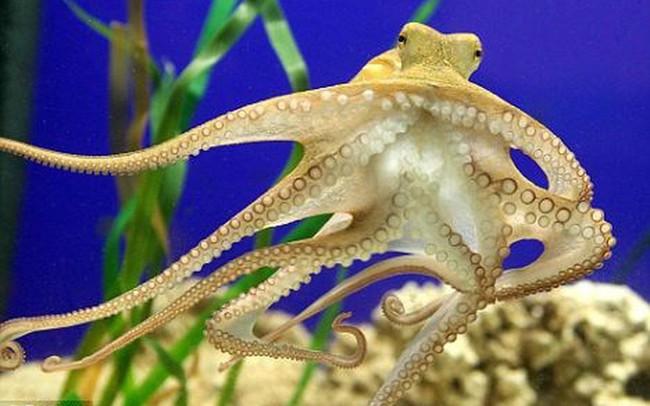 Xuất khẩu mực và bạch tuộc giảm gần 8% trong tháng 8/2018