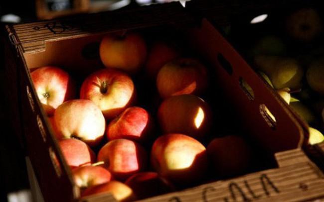 Nông dân trồng táo Mỹ lo bị Trung Quốc trả đũa