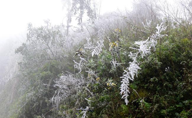 Nhiệt độ xuống thấp, miền Bắc có thể xuất hiện băng giá