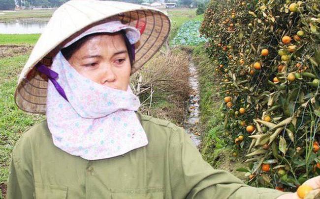 Hình ảnh người nông dân khóc nghẹn bên 450 gốc quất bị phá hoại dịp cận Tết khiến cộng đồng mạng xót xa