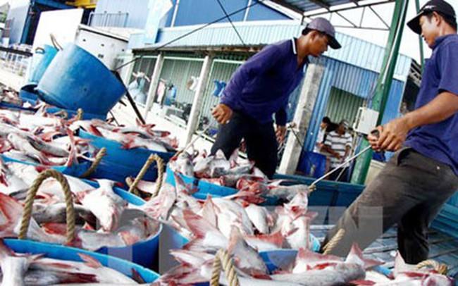 Tín hiệu vui trong xuất khẩu cá tra
