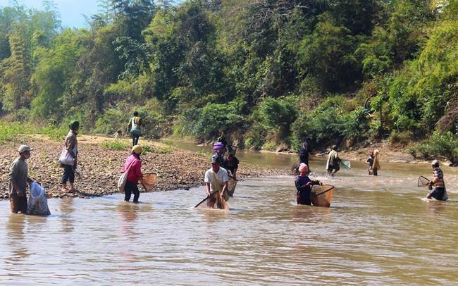 Cá chết hàng loạt do vỡ bể chứa nước thải nhà máy ở Điện Biên