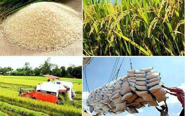 Tin vui cho các DN xuất khẩu: Nhiều dấu hiệu nhập khẩu gạo thế giới năm 2018 sẽ sôi động