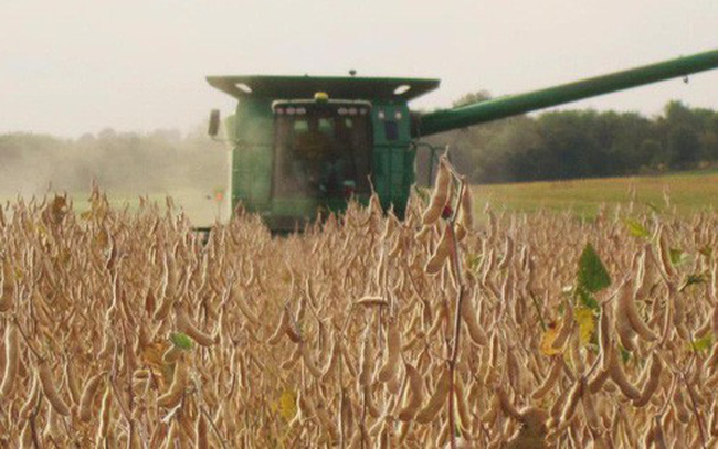 """""""Canh bạc"""" đậu tương của nông dân Mỹ"""