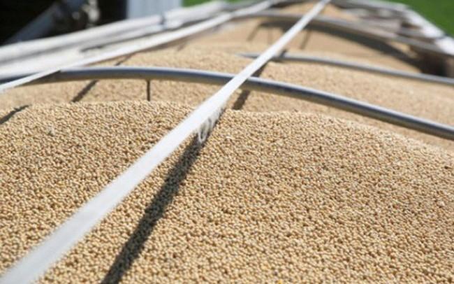Thiện chí trước đàm phán, Trung Quốc tiếp tục mua đậu tương Mỹ
