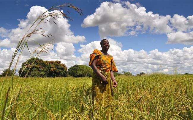 Bộ NNPTNT muốn tập trung xuất khẩu gạo thơm, gạo nếp