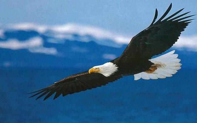 """Đã là """"Đại bàng"""" thì cần gì quan tâm tới cái nhìn của """"Chim sẻ""""? Người khôn ngoan nên tự biết bản thân muốn gì!"""