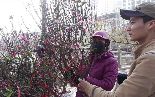 """Cành đào mini gây """"sốt"""" ở Hà Nội"""