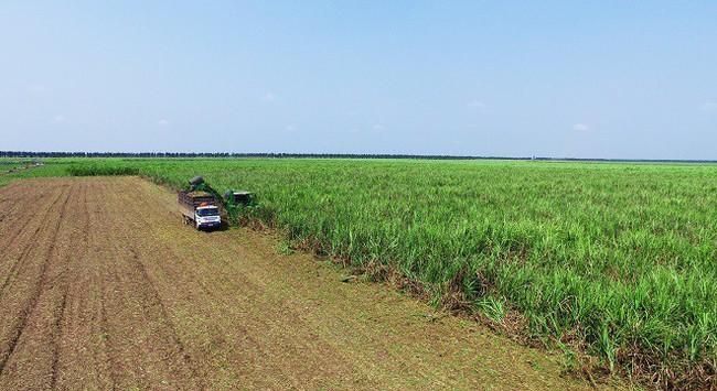 SBT tăng cường hỗ trợ người nông dân, tiếp tục duy trì vị thế trong rổ VN30