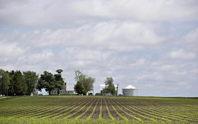 Những hoài nghi về cam kết mua thêm nông sản Mỹ của Trung Quốc - ảnh 1