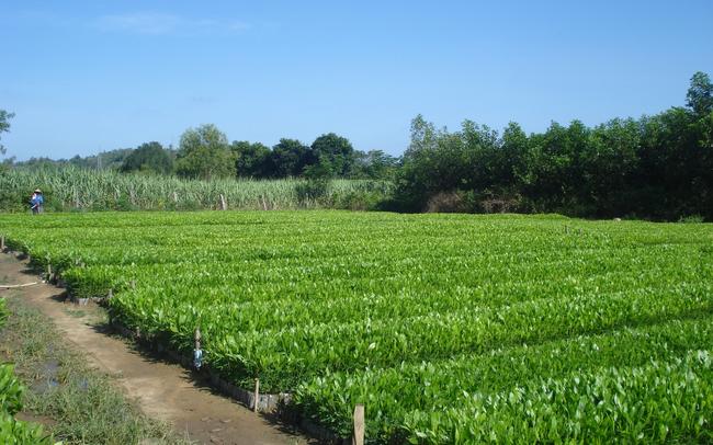Giống cây trồng Trung Ương (NSC) lãi 139 tỷ đồng trong 9 tháng, giảm 15% so với cùng kỳ - ảnh 1