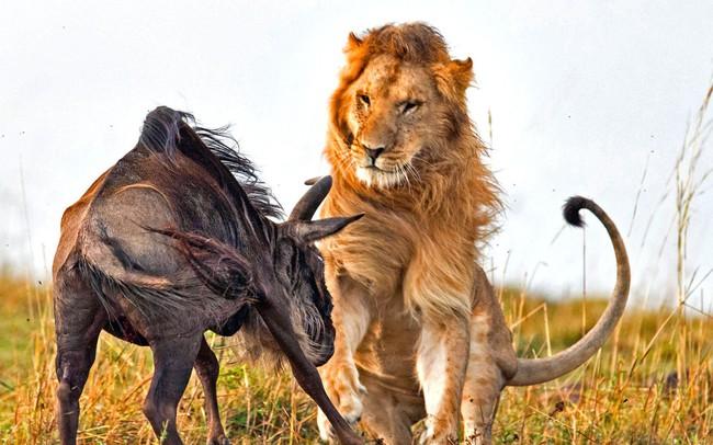 Đủ tàn nhẫn, chúng ta mới đến gần thành công, muốn làm sư tử phải học cách ăn thịt sống!