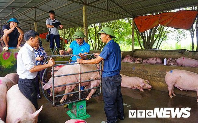 Giá lợn hơi lập đỉnh 78.000 đồng/kg, giá bán lẻ đắt kỷ lục 150.000 đồng/kg
