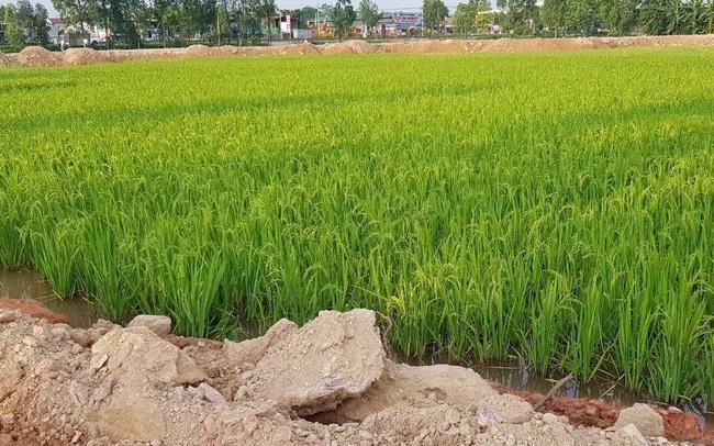 Phạt 50 triệu đồng nếu chuyển quyền sử dụng đất nông nghiệp vượt hạn mức quy định