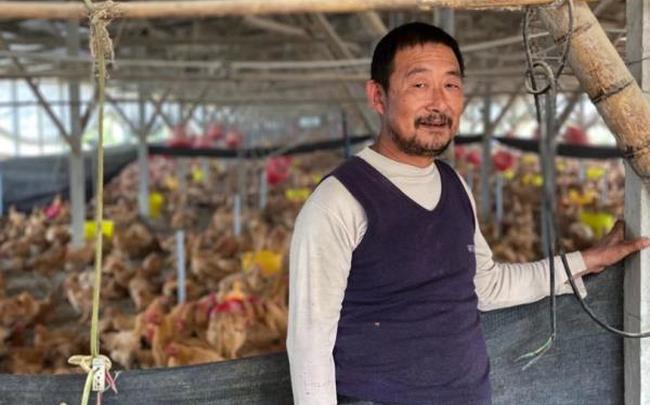 Lợn chết chuyển sang nuôi gà, nông dân Trung Quốc vẫn 'méo mặt' vì thua lỗ