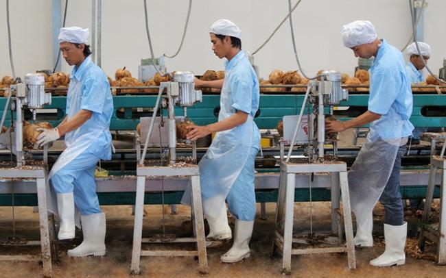 """Bloomberg: Cơ hội cho ngành dừa Việt Nam từ nhu cầu ăn uống """"không sữa"""" của người tiêu dùng phương Tây"""