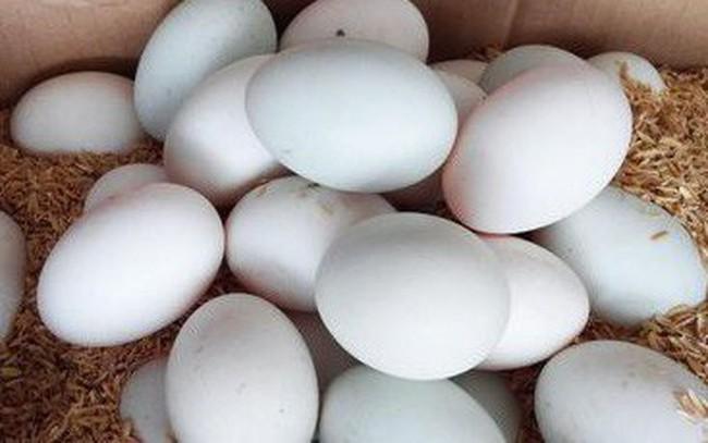 Giá chưa đến 2.000 đồng/quả trứng vịt, người chăn nuôi đang thua lỗ nặng