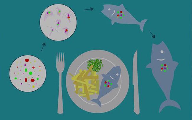 Những mảnh nhựa siêu nhỏ cũng ảnh hưởng tiêu cực đến sức khỏe của bạn như thế nào?
