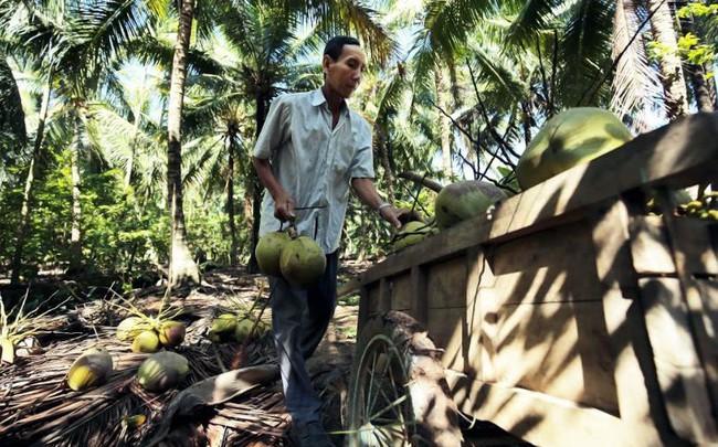 Betrimex và khát vọng đến từ xứ dừa Bến Tre