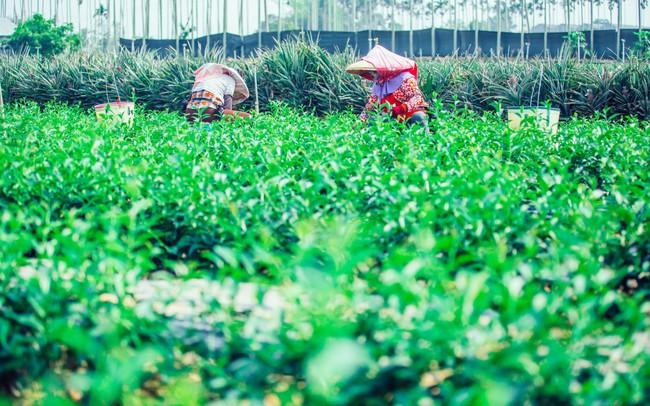 Cầu kỳ và khác biệt như trà Presotea