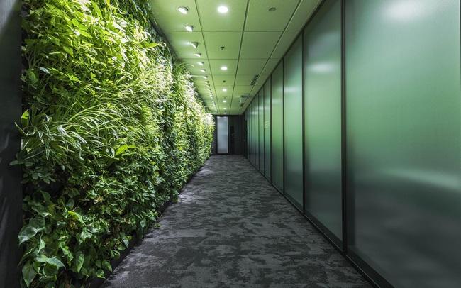 Khơi nguồn cảm hứng từ những văn phòng xanh