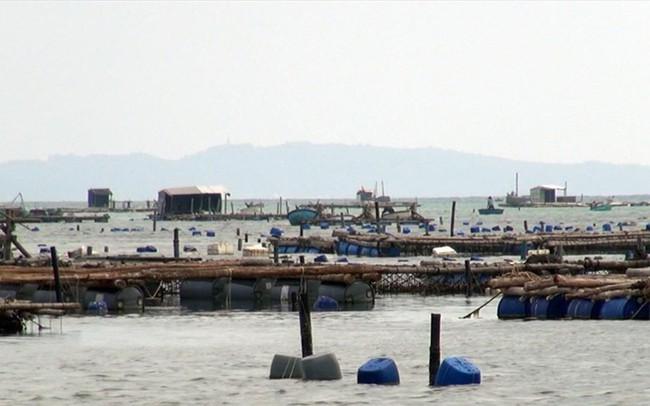 Phú Yên: Tôm hùm nuôi ở đảo Lao Mái Nhà chết hàng loạt