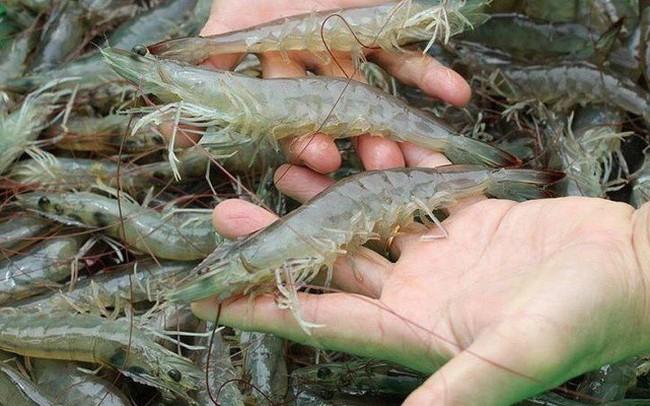 Thực phẩm Sao Ta (FMC) đặt kế hoạch lãi 180 tỷ đồng năm 2019