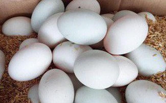 Vừa quay đầu tăng được vài ngày, giá trứng gia cầm lại đảo chiều lao dốc xuống thấp kỷ lục