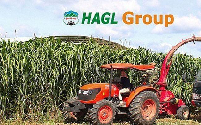 Hoàng Anh Gia Lai (HAG): Doanh thu quý 1 đạt 410 tỷ đồng, hoàn thành 8% kế hoạch năm