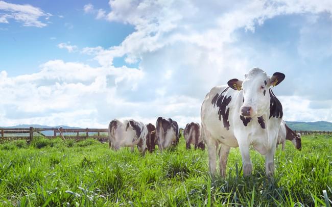 Vinamilk đã có những bước tiến dài sau hơn 2 năm làm sữa organic