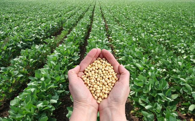 [Hình: soybean-5-15574534225251628602631-crop-1...740781.jpg]