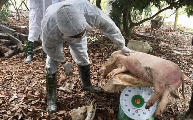 Đề xuất cấp đông hàng triệu tấn thịt lợn để dự trữ đối phó dịch tả lợn - ảnh 1