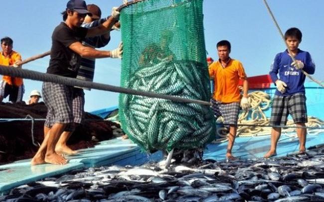 Vi phạm về khai thác thủy sản phạt đến 1 tỷ đồng - ảnh 1